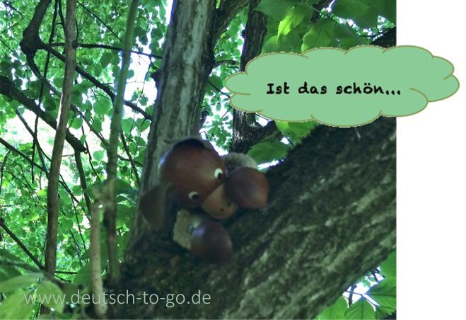 Hoertext_Warum_Koalas_Baeume_umarmen_Deutsch_to_go_CS_IPTC