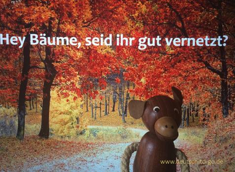 Hoertext_Auch_Baeume_sind_soziale_Wesen_Deutsch_to_go_IP_IPTC