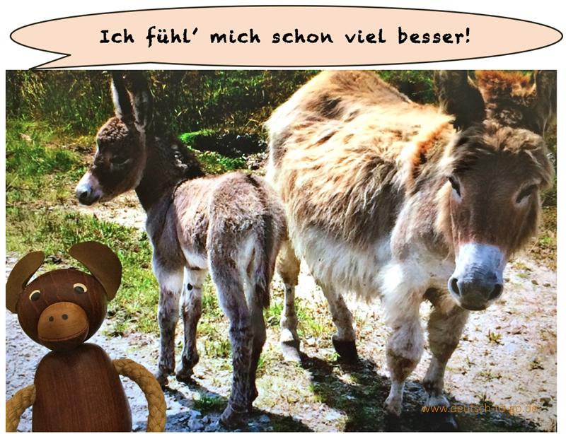 HV_Bild_Mini_Pferde_im_Krankenhaus_CS_IPTC