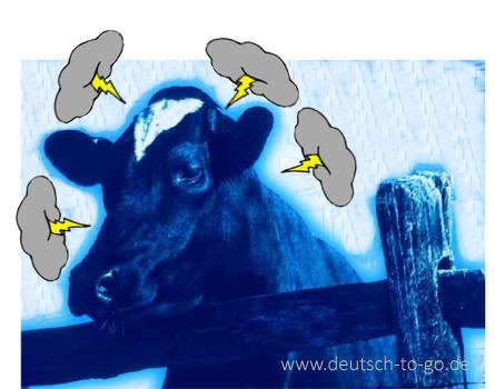 Hoertext_Wenn_Kuehe_die_Nerven_verlierenl_Deutsch_to_go_IP_IPTC